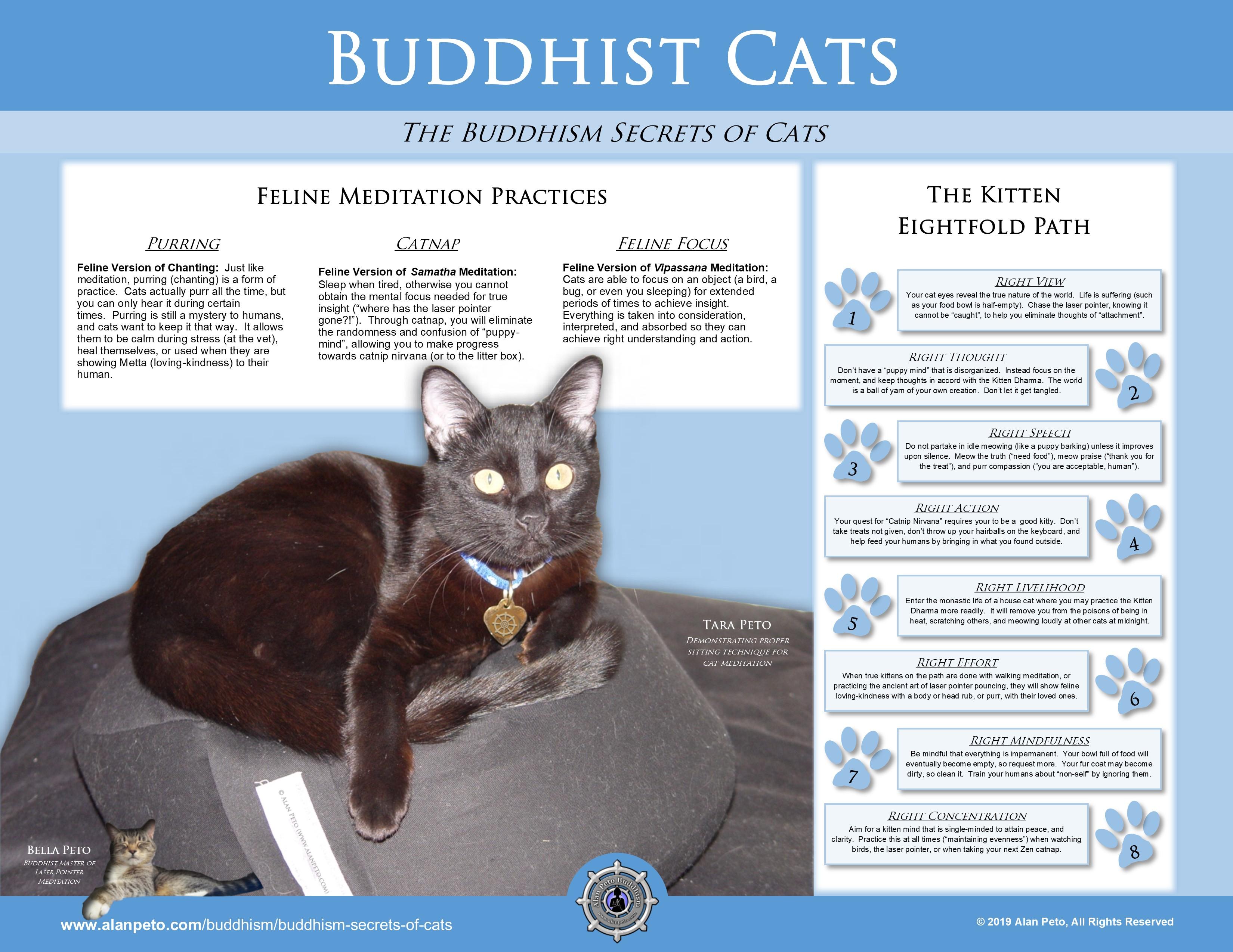 Buddhism Secrets of Cats - Alan Peto