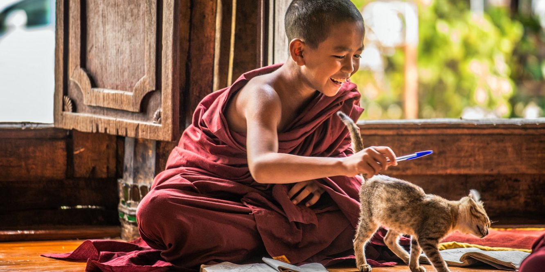 Buddhism Secrets Of Cats Alan Peto